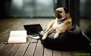 Как научить собаку на поиск людей