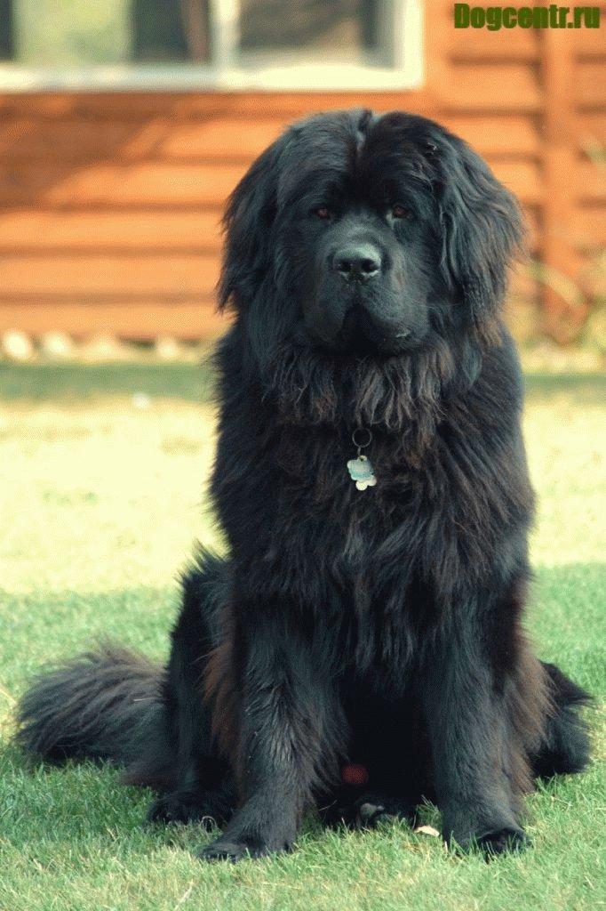 водолаз собака