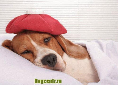 пёс заболел