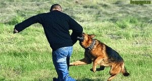 Опасность собак