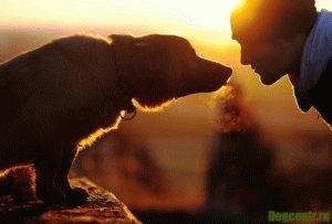 Любовь собаки- она бесценна