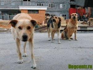 действия после укуса собаки