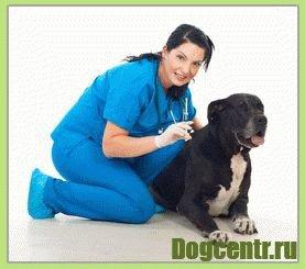 прививка для щенка