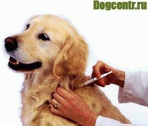 Прививки-собакам