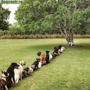 туалет-для-собак