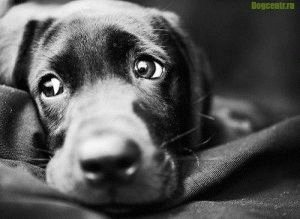 Лечение и профилактика для собаки