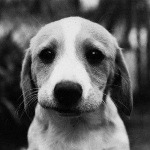 Общения собак