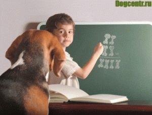 Мальчик обучает щенка