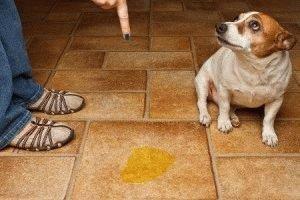 Собака гадит дома