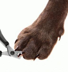 Как стричь собаке ногти