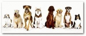 Какие бывают породы собак