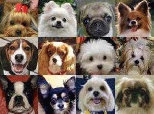 Мордочки собак