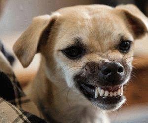 Зубастый пёс