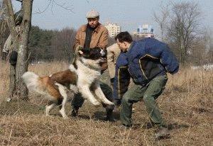 Как собаку научить команде фас