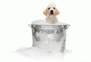Купание пса