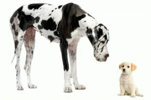 Крупная и декоративная породы собак