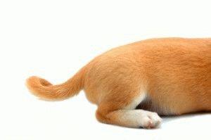 Течка у собак что делать