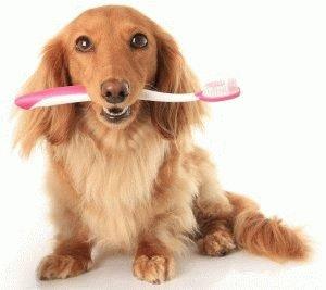 Собака с зубной щеткой