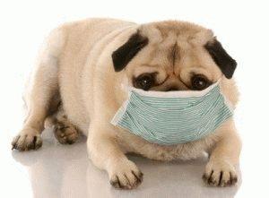 Собака чихает - что делать