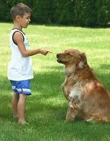 Как воспитывать собаку