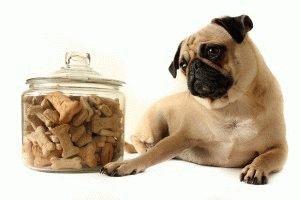 Какой корм для собак лучше