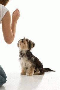 Приручение собаки