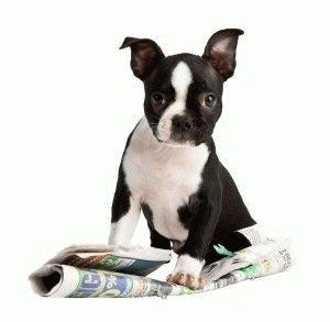 Как отучить собаку писать дома