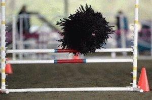 Собака-тряпка Пули