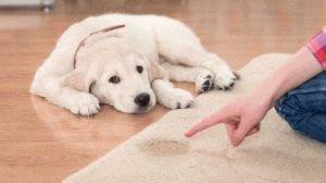 чтобы щенок не гадил