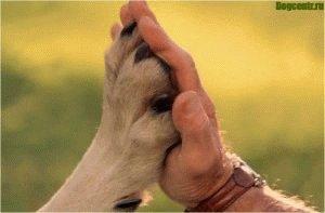 Верный друг - это собака
