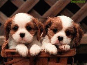 уважение щенков