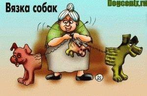 вязка собак