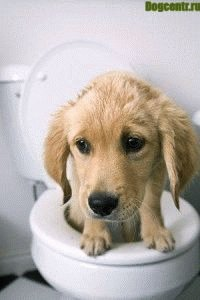 dog-constipation3