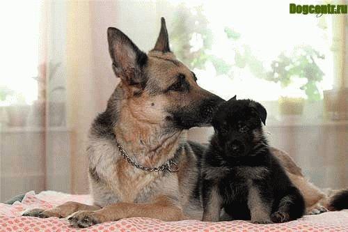 ВЕО лучшая собака