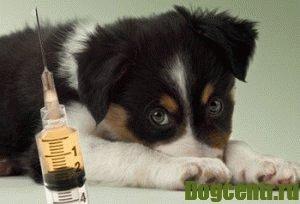 цена за первую прививку