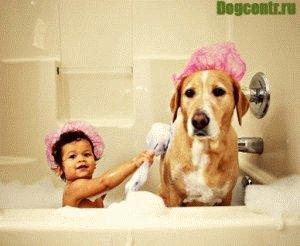 как сохранить собаку в здоровом состоянии