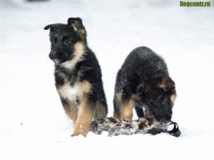 щенки в снегу