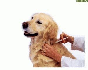 когда нужно прививать щенка
