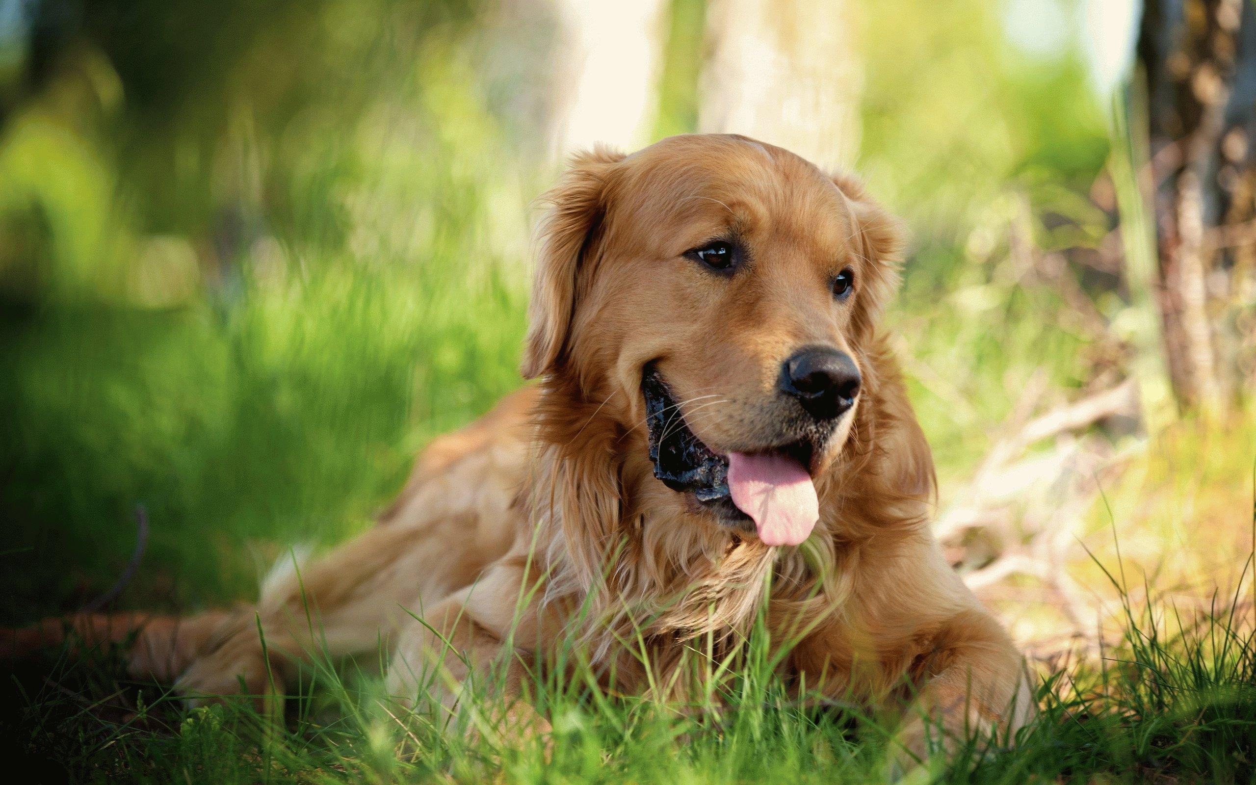 Хд картинки собак