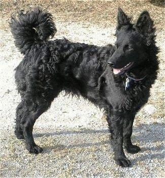 Собака Муди