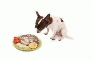 Собака не может выбрать что съесть