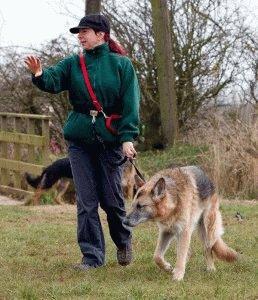 Как дрессировать немецкую овчарку