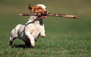 Послушная собака