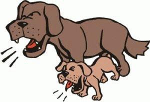 Все собаки громко лают