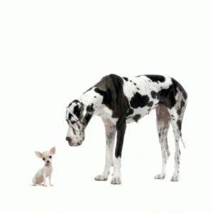 Маленькая и большая собаки