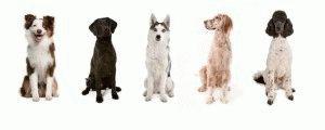 Какие есть породы собак