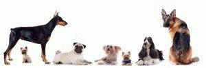 Разные собачьи породы