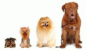 Как определить породу собаки
