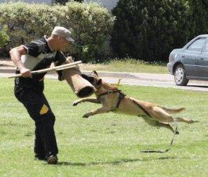 Как приучить собаку к командам