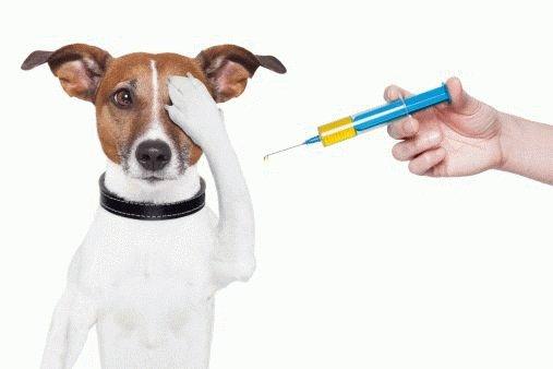 Как делать укол щенку